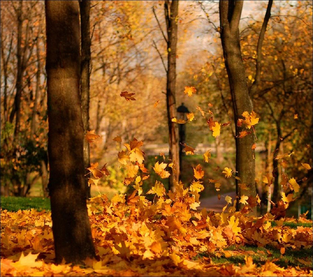 Fall Leaves Autumn Forest Nature Wallpaper Macbook